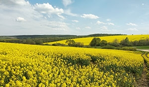 Viterra plans Canola Crushing Plant in Regina