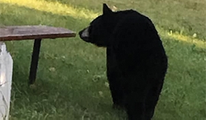 Bear enters home at Stanley Mission